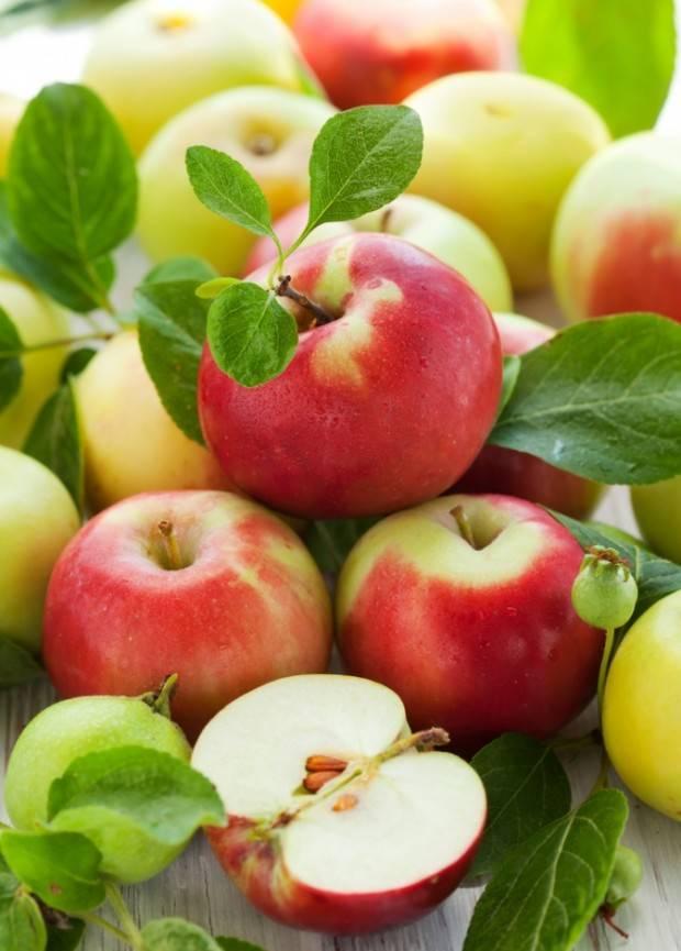 яблоко клетчатка фото